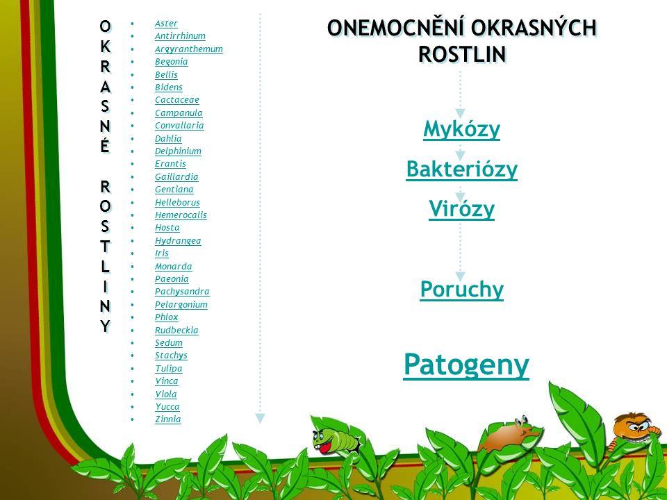 OKRASNÉROSTLINYOKRASNÉROSTLINY OKRASNÉROSTLINYOKRASNÉROSTLINY •AsterAster •AntirrhinumAntirrhinum •ArgyranthemumArgyranthemum •BegoniaBegonia •BellisBellis •BidensBidens •CactaceaeCactaceae •CampanulaCampanula •ConvallariaConvallaria •DahliaDahlia •DelphiniumDelphinium •ErantisErantis •GaillardiaGaillardia •GentianaGentiana •HelleborusHelleborus •HemerocalisHemerocalis •HostaHosta •HydrangeaHydrangea •IrisIris •MonardaMonarda •PaeoniaPaeonia •PachysandraPachysandra •PelargoniumPelargonium •PhloxPhlox •RudbeckiaRudbeckia •SedumSedum •StachysStachys •TulipaTulipa •VincaVinca •ViolaViola •YuccaYucca •ZinniaZinnia ONEMOCNĚNÍ OKRASNÝCH ROSTLIN Mykózy Bakteriózy Virózy Poruchy Patogeny