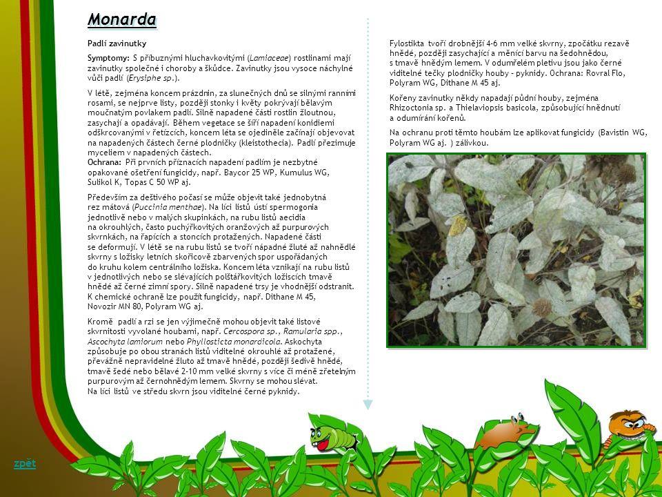 Odumírání výhonů a hnilobu oddenků kosatce Botryotinia convoluta (teleom.: Botrytis convoluta) Symptomy: Patogen proniká z půdy do rostlin ranami, kte