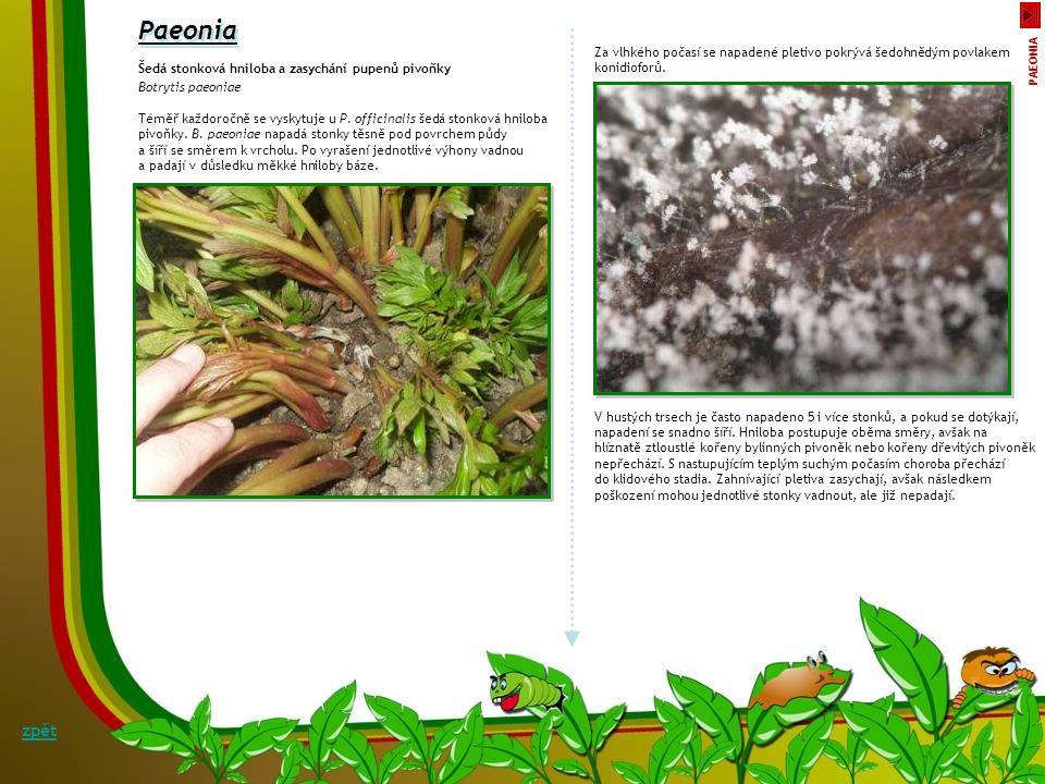 Padlí zavinutky Symptomy: S příbuznými hluchavkovitými (Lamiaceae) rostlinami mají zavinutky společné i choroby a škůdce. Zavinutky jsou vysoce náchyl