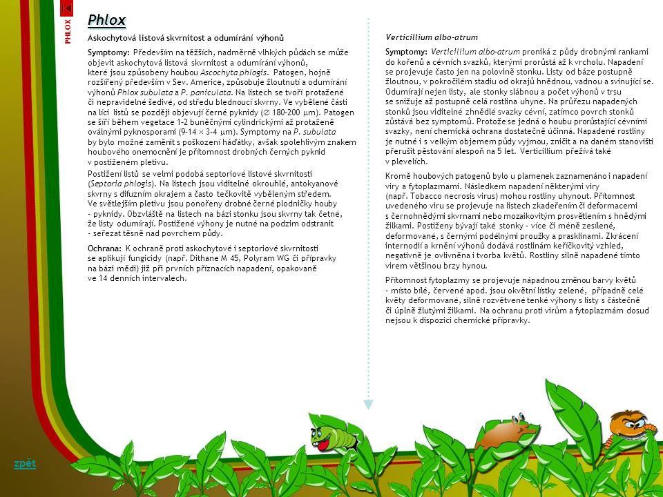 Padlí plamenky Erysiphe magnicellulata (= E. cichoracearum) a Sphaerotheca fusca (= S. fuliginea), Symptomy: Nejčastějším, každoročně se vyskytující c