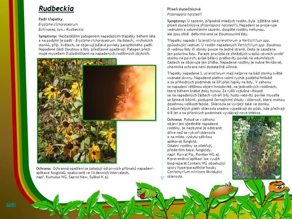 Askochytová listová skvrnitost a odumírání výhonů Symptomy: Především na těžších, nadměrně vlhkých půdách se může objevit askochytová listová skvrnito
