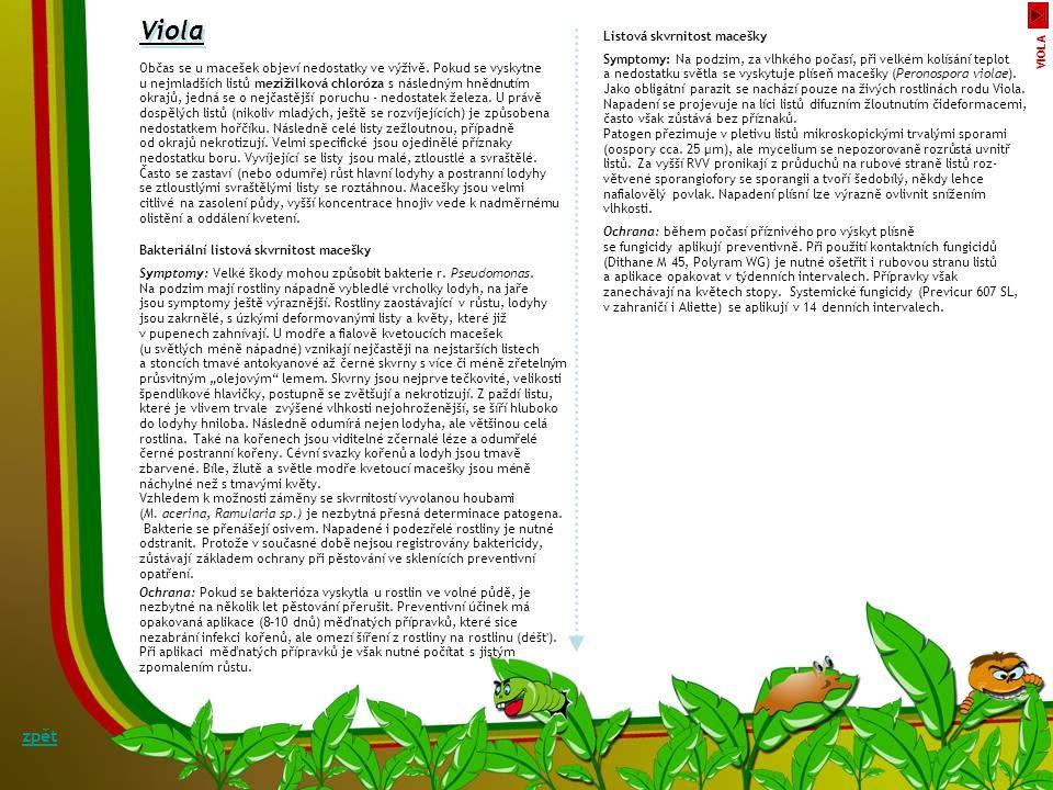 Phoma exigua Puccinia spp. Fomová hniloba barvínku Symptomy: Za chladnějšího vlhčího počasí (t 10–18 °C) se v porostech barvínku vyskytuje fomová hnil