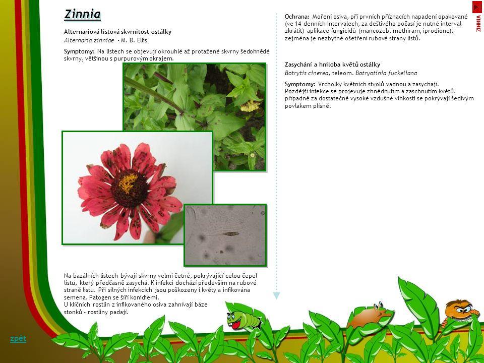 Hnědá listová skvrnitost juky Coniothyrium concentricum, teleom.Paraphaeosphaeria obtusispora Jedním z houbových patogenů, který poškozuje listy juk,