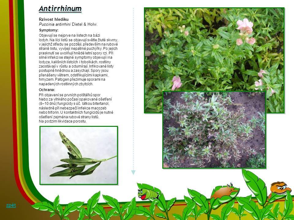 Bakteriální mokrá hniloba kořenového krčku a kořenů denivky Erwinia carotovora Symptomy: Prvními příznaky hnilob kořenů a kořenového krčku je rychlé žloutnutí listů a opad květních poupat.