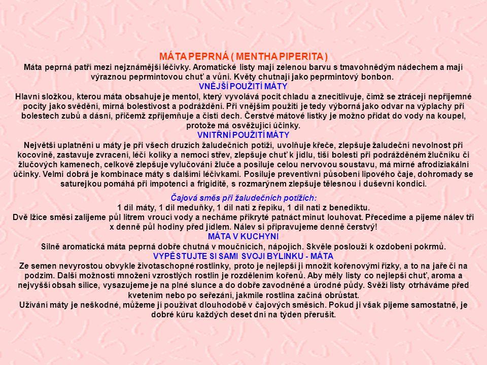 MÁTA PEPRNÁ ( MENTHA PIPERITA ) Máta peprná patří mezi nejznámější léčivky. Aromatické listy mají zelenou barvu s tmavohnědým nádechem a mají výraznou