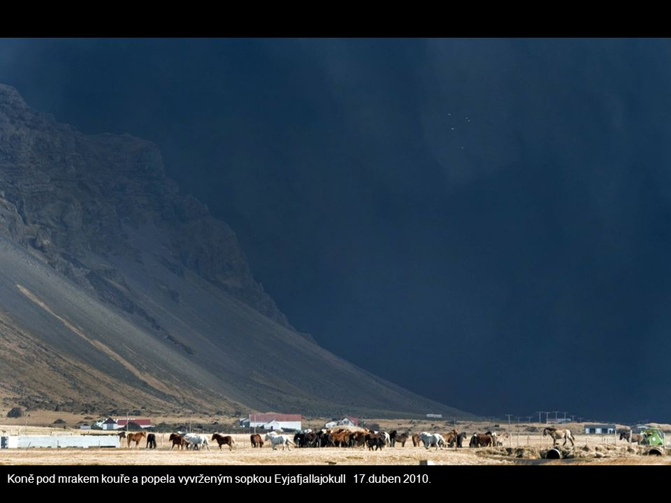 Koně pod mrakem kouře a popela vyvrženým sopkou Eyjafjallajokull 17.duben 2010.