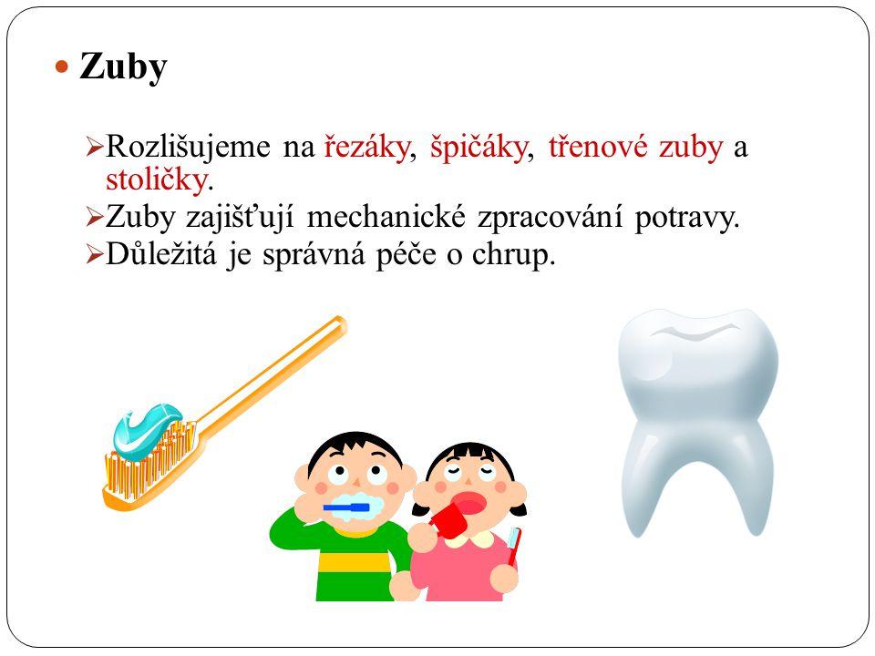 Dutina ústní Dutina ústní je počátkem trávicí soustavy člověka. Skládá se ze zubů, jazyka a slinných žláz. ústa