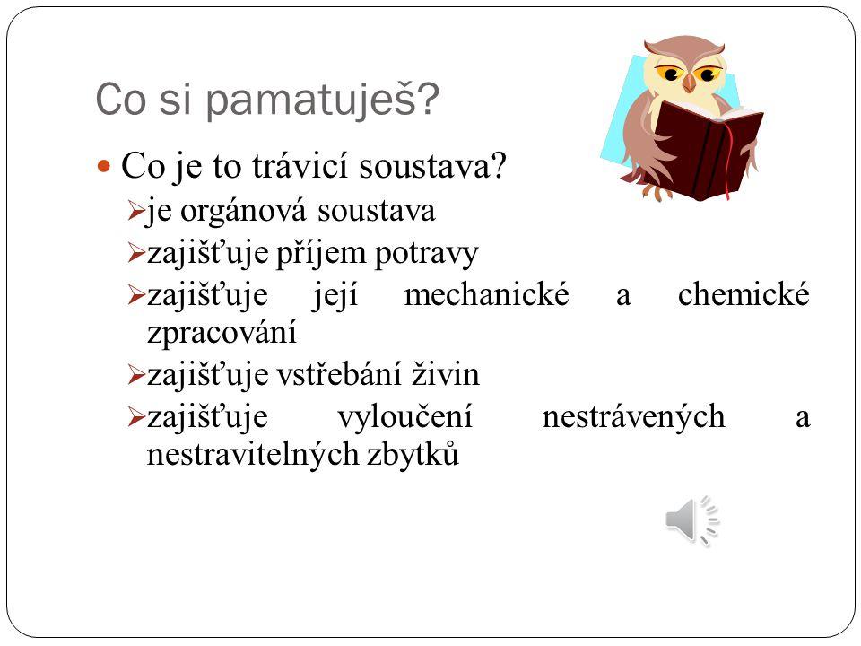 http://galenus.cz/img/zdravi/traveni/tenke-strevo.jpg