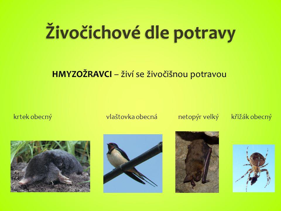 krtek obecnývlaštovka obecnánetopýr velkýkřižák obecný HMYZOŽRAVCI – živí se živočišnou potravou