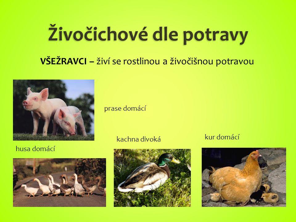 prase domácí husa domácí kachna divoká kur domácí VŠEŽRAVCI – živí se rostlinou a živočišnou potravou