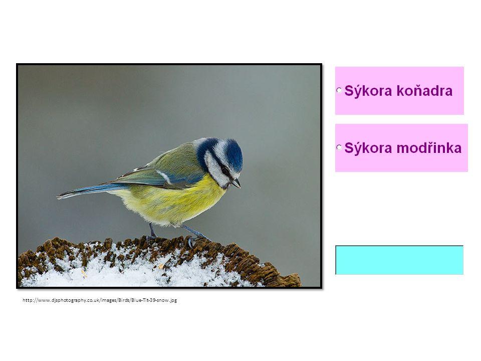http://www.djsphotography.co.uk/images/Birds/Blue-Tit-39-snow.jpg