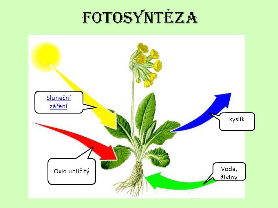 Teplo a sv ě tlo ze slunce • Teplo a světlo • Teplo a světlo patří mezi základní podmínky života na Zemi.
