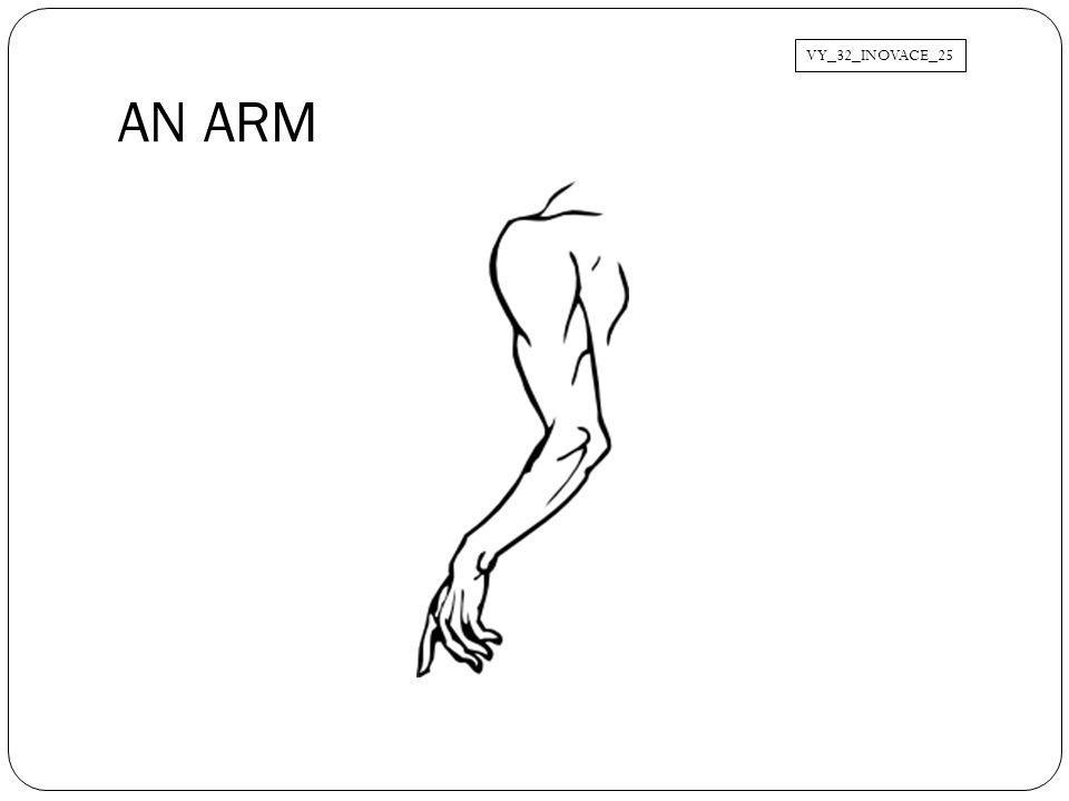 VY_32_INOVACE_25 AN ARM