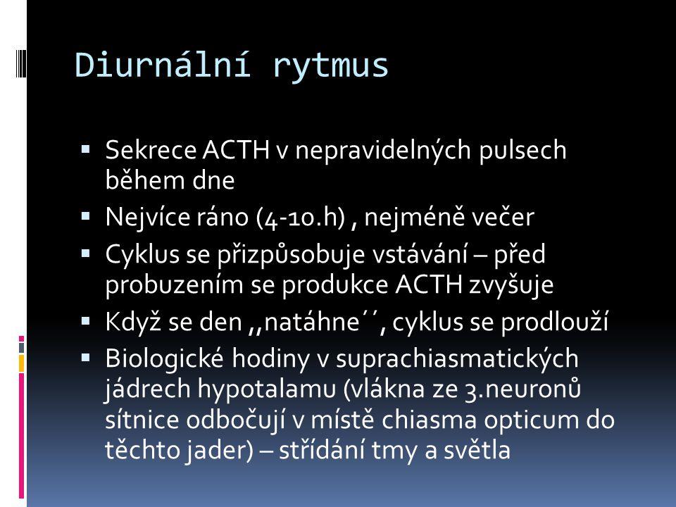Diurnální rytmus  Sekrece ACTH v nepravidelných pulsech během dne  Nejvíce ráno (4-10.h), nejméně večer  Cyklus se přizpůsobuje vstávání – před pro