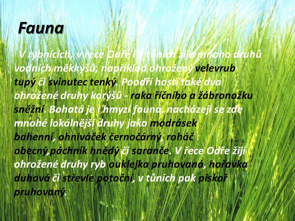 Fauna V CHKO Poodří žije mnoho druhů obojživelníků, z hlediska ochrany přírody k nejvýznamnějším patří čolek velký, blatnice skvrnitá a skokan ostronosý.