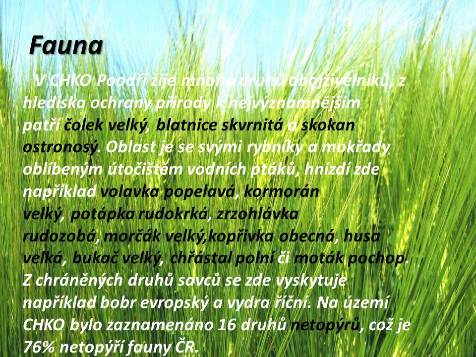 Fauna V CHKO Poodří žije mnoho druhů obojživelníků, z hlediska ochrany přírody k nejvýznamnějším patří čolek velký, blatnice skvrnitá a skokan ostrono