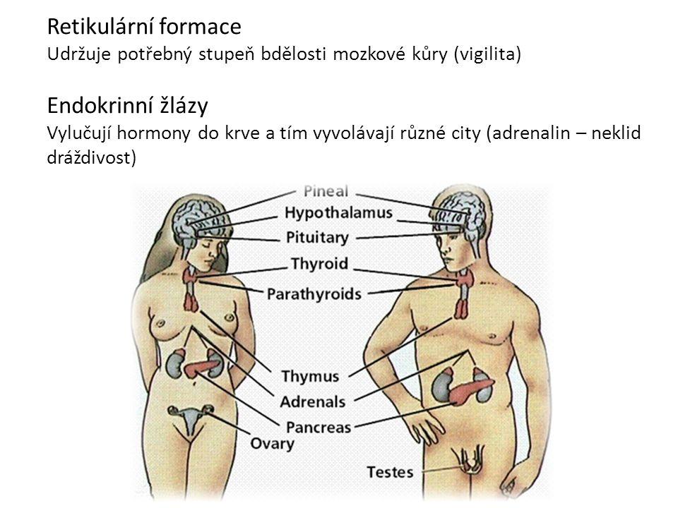Retikulární formace Udržuje potřebný stupeň bdělosti mozkové kůry (vigilita) Endokrinní žlázy Vylučují hormony do krve a tím vyvolávají různé city (ad