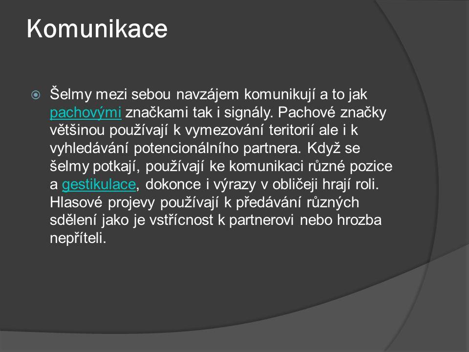 Komunikace  Šelmy mezi sebou navzájem komunikují a to jak pachovými značkami tak i signály. Pachové značky většinou používají k vymezování teritorií