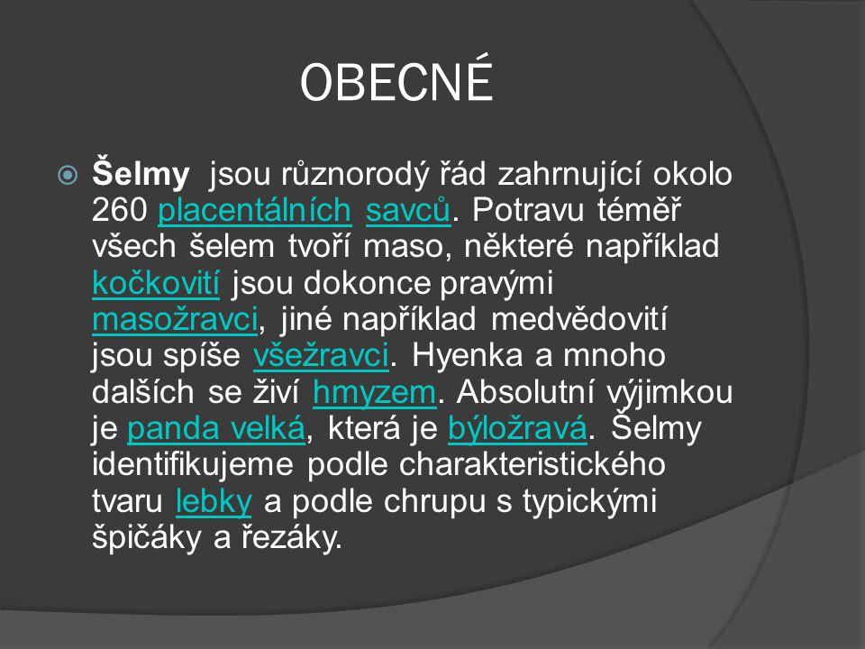OBECNÉ  Šelmy jsou různorodý řád zahrnující okolo 260 placentálních savců. Potravu téměř všech šelem tvoří maso, některé například kočkovití jsou dok