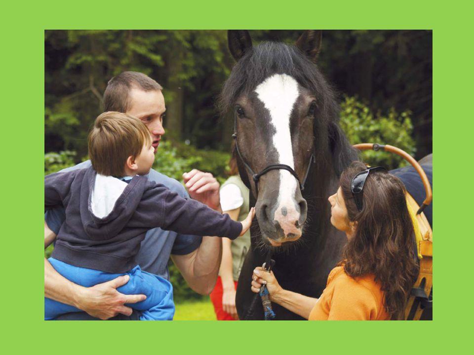 • Díky hipoterapii jsme již pomohli desítkám dětí, kterým se zlepšila kvalita života.