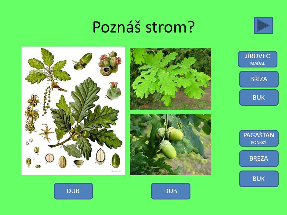 Poznáš rostlinu? SNEŽIENKA TULIPÁN NARCIS KOPŘIVA SNĚŽENKA TULIPÁN NARCIS ŽIHLAVA