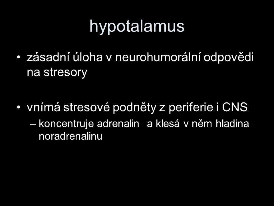 hypotalamus •zásadní úloha v neurohumorální odpovědi na stresory •vnímá stresové podněty z periferie i CNS –koncentruje adrenalin a klesá v něm hladina noradrenalinu
