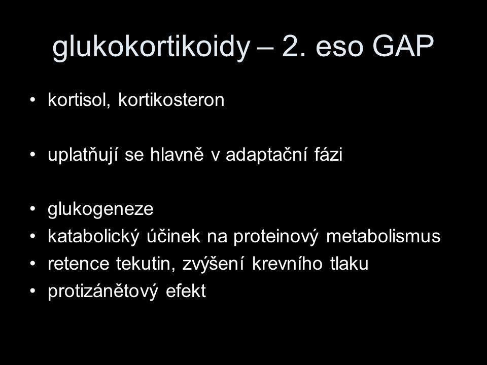 glukokortikoidy – 2. eso GAP •kortisol, kortikosteron •uplatňují se hlavně v adaptační fázi •glukogeneze •katabolický účinek na proteinový metabolismu