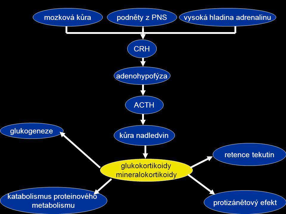 mozková kůrapodněty z PNSvysoká hladina adrenalinu CRH adenohypofýza ACTH kůra nadledvin glukokortikoidy mineralokortikoidy glukogeneze katabolismus p