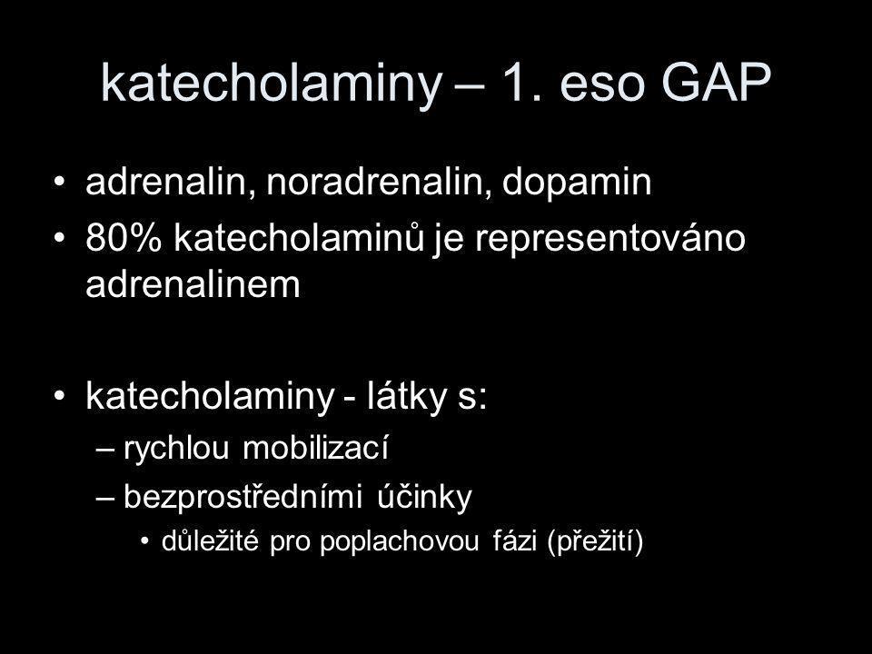 katecholaminy – 1. eso GAP •adrenalin, noradrenalin, dopamin •80% katecholaminů je representováno adrenalinem •katecholaminy - látky s: –rychlou mobil