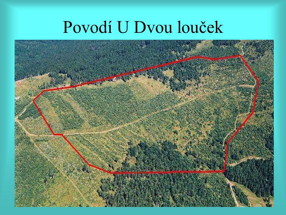 Povodí U Dvou louček v Orlických horách, katastr obce Říčky, pozemky Správy Kolowratských lesů.