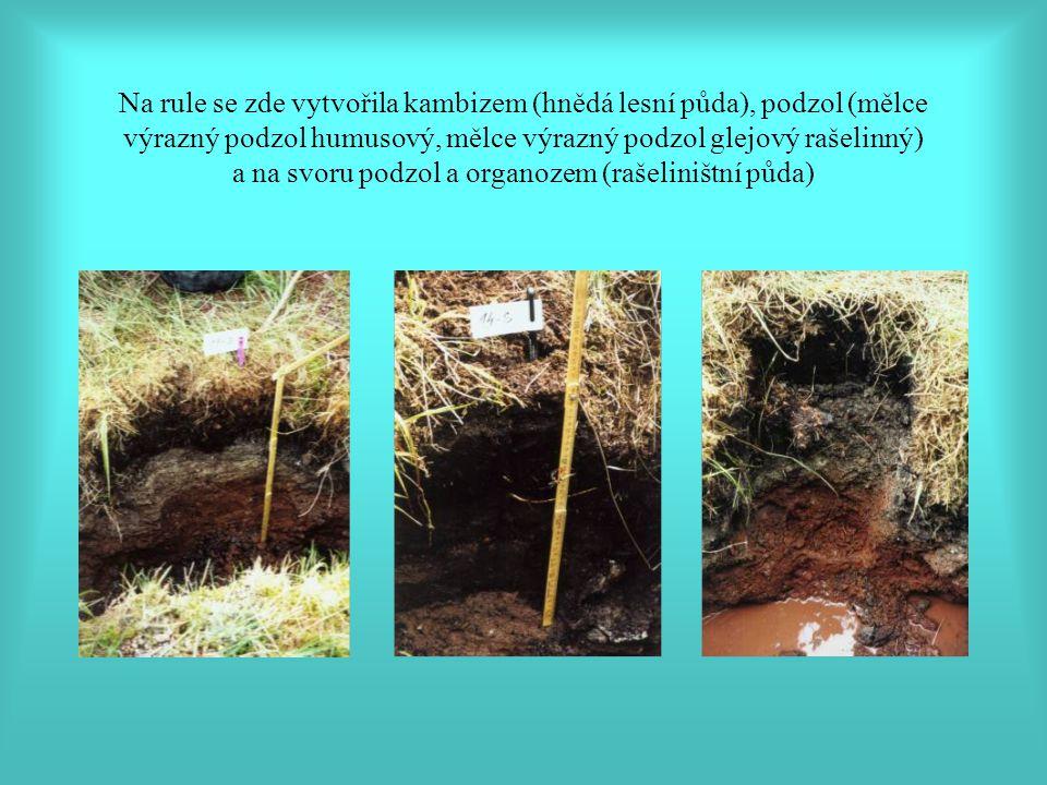 Na rule se zde vytvořila kambizem (hnědá lesní půda), podzol (mělce výrazný podzol humusový, mělce výrazný podzol glejový rašelinný) a na svoru podzol a organozem (rašeliništní půda)