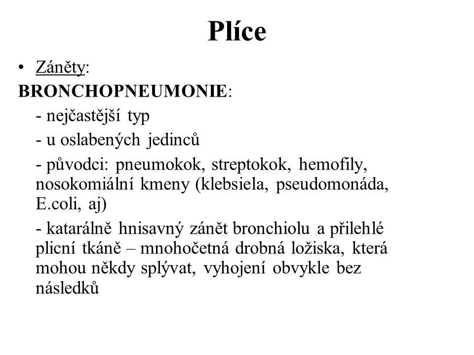 Plíce •Záněty: BRONCHOPNEUMONIE: - nejčastější typ - u oslabených jedinců - původci: pneumokok, streptokok, hemofily, nosokomiální kmeny (klebsiela, p