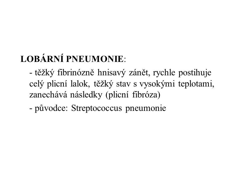 LOBÁRNÍ PNEUMONIE: - těžký fibrinózně hnisavý zánět, rychle postihuje celý plicní lalok, těžký stav s vysokými teplotami, zanechává následky (plicní f