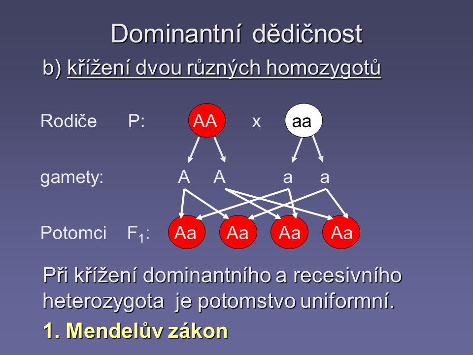 Dominantní dědičnost b) křížení dvou různých homozygotů Rodiče P: gamety: Potomci F 1 : AA x aa A A aa Aa Při křížení dominantního a recesivního heterozygota je potomstvo uniformní.