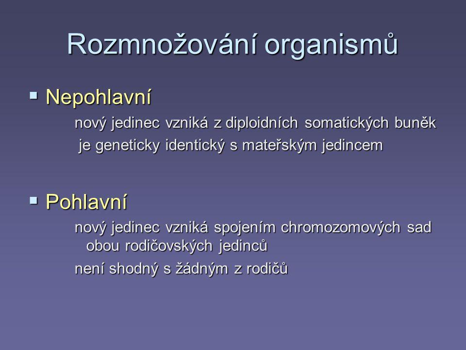 Rozmnožování organismů  Nepohlavní nový jedinec vzniká z diploidních somatických buněk je geneticky identický s mateřským jedincem je geneticky identický s mateřským jedincem  Pohlavní nový jedinec vzniká spojením chromozomových sad obou rodičovských jedinců není shodný s žádným z rodičů