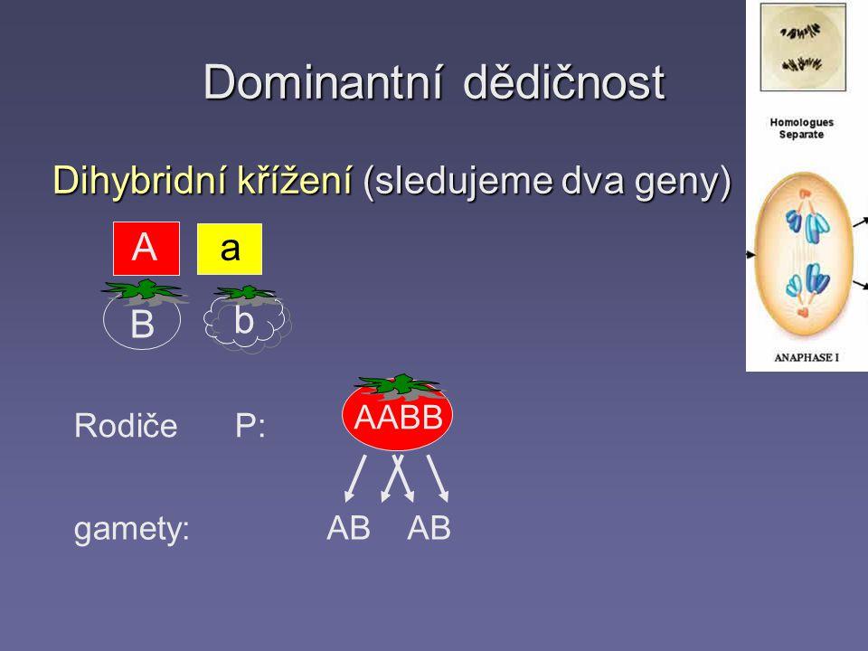 Dominantní dědičnost Dihybridní křížení (sledujeme dva geny) Rodiče P: gamety: AABB AB Aa b B