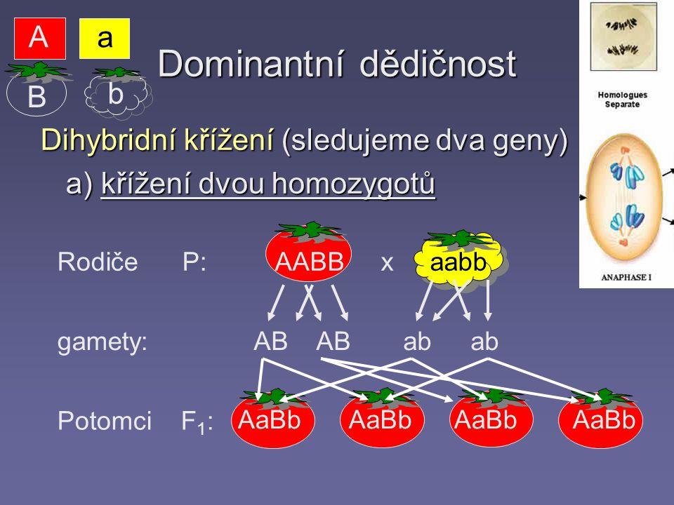 Dominantní dědičnost Dihybridní křížení (sledujeme dva geny) a) křížení dvou homozygotů Rodiče P: gamety: Potomci F 1 : AABB x aabb AB AB ab ab AaBb Aa b B