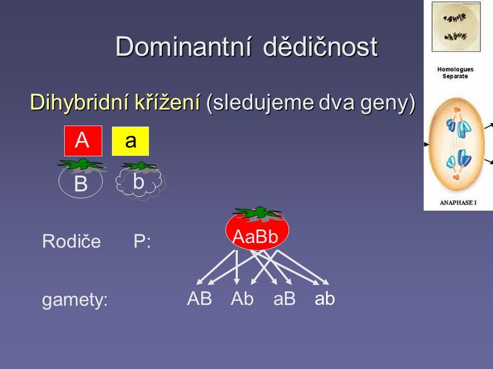 Dominantní dědičnost Dihybridní křížení (sledujeme dva geny) Rodiče P: gamety: AaBb Aa b B ABAbaB ab