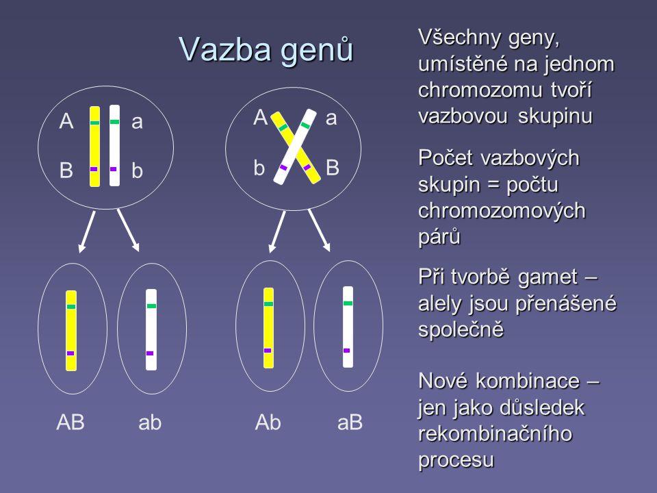 Vazba genů Všechny geny, umístěné na jednom chromozomu tvoří vazbovou skupinu Aa bB ABab Aa bB AbaB Počet vazbových skupin = počtu chromozomových párů Při tvorbě gamet – alely jsou přenášené společně Nové kombinace – jen jako důsledek rekombinačního procesu