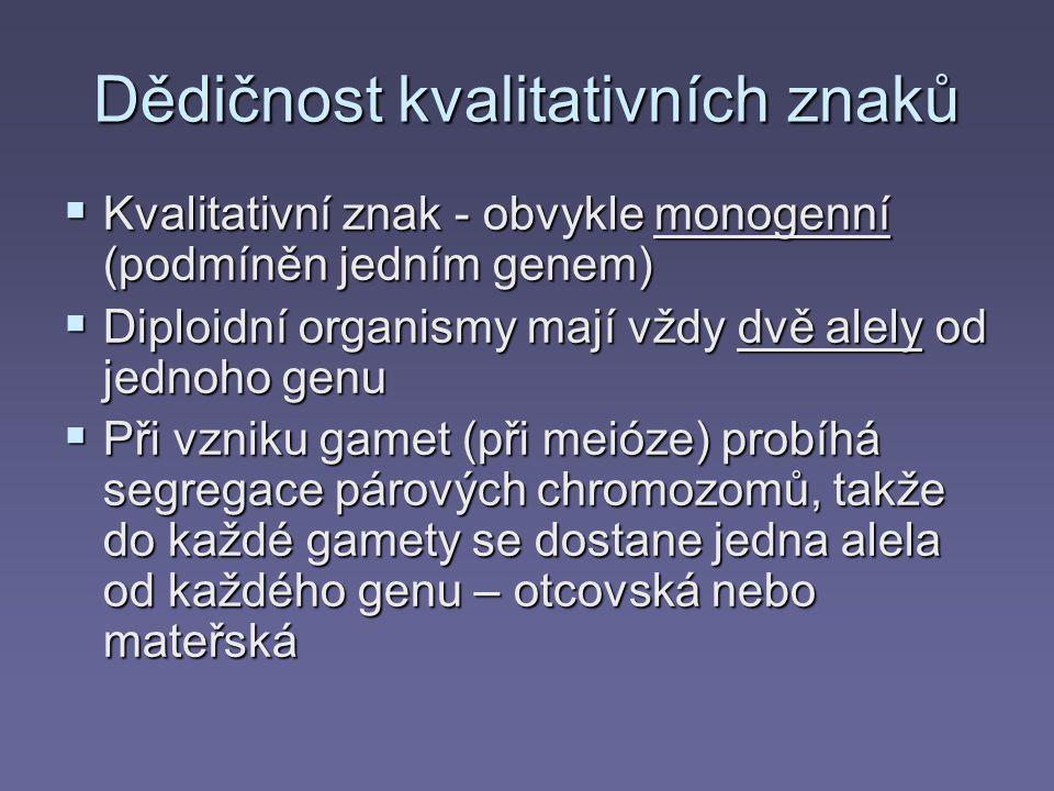 Dědičnost kvalitativních znaků  Kvalitativní znak - obvykle monogenní (podmíněn jedním genem)  Diploidní organismy mají vždy dvě alely od jednoho genu  Při vzniku gamet (při meióze) probíhá segregace párových chromozomů, takže do každé gamety se dostane jedna alela od každého genu – otcovská nebo mateřská