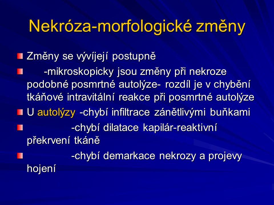 Nekróza- Změny v buňce Jádro-v jádře dochází k pyknoze-kondenzace chromatinu a zmenšení jádra -nástěnné hyperchomatoze -karyolyze-rozpad -karyorhexi-fragmentace jaderného chromatinu Cytoplasma- v plasmě dochází k eosinofilii, resp.