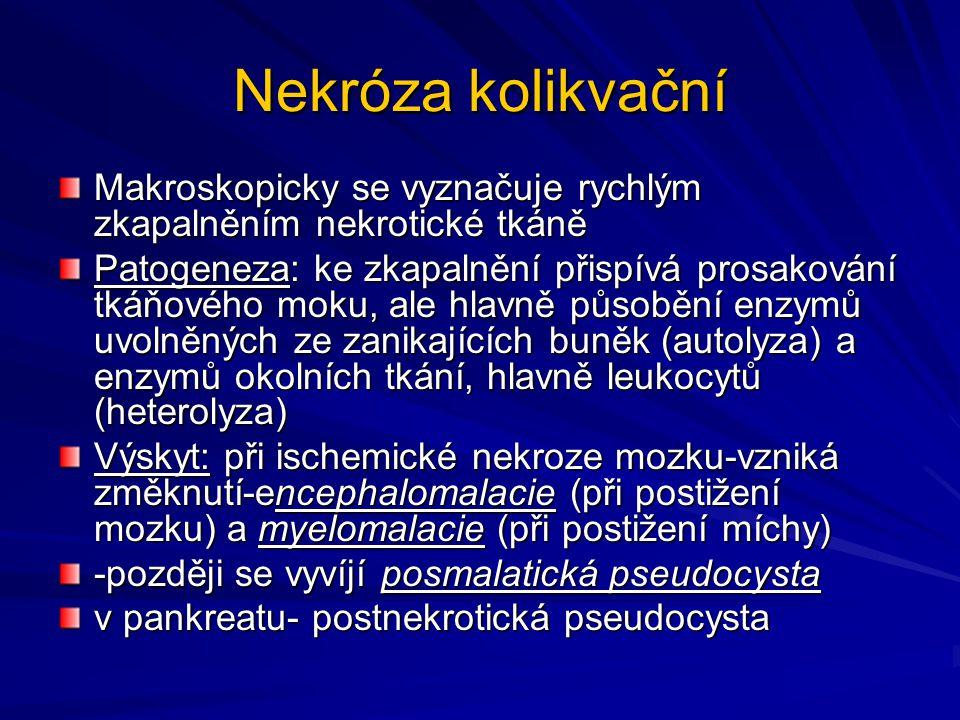 Kolikvační nekróza v ledvině- mykotická infekce