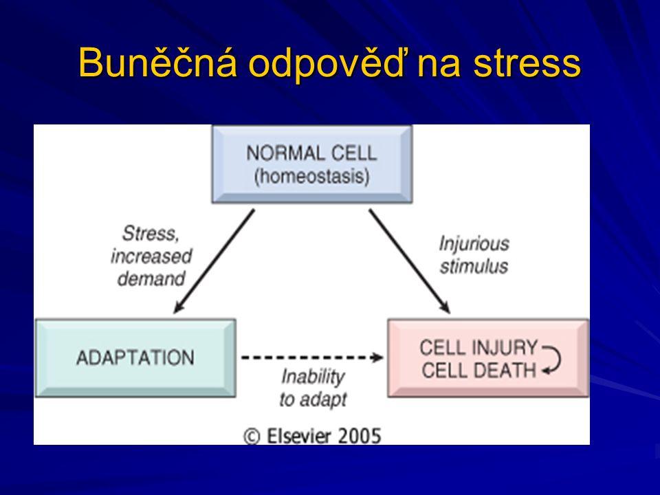 Buněčná odpověď na stress