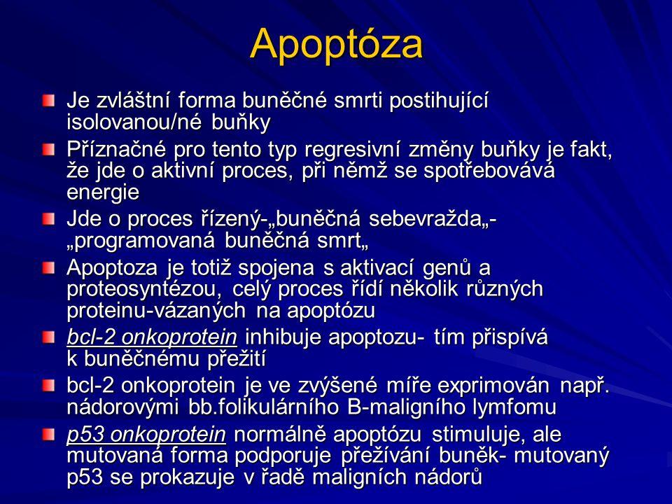 Apoptóza Je zvláštní forma buněčné smrti postihující isolovanou/né buňky Příznačné pro tento typ regresivní změny buňky je fakt, že jde o aktivní proc