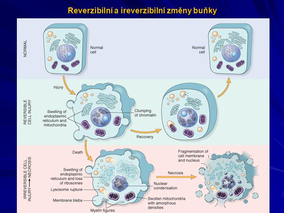 Příčiny poškození buněk Hypoxie-poškození buňky redukcí aerobního metabolismu Fyzikální příčiny-mechanické trauma, teplotní výkyvy, záření,..