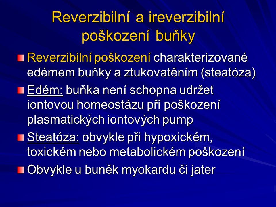 Reverzibilní a ireverzibilní poškození buňky Reverzibilní poškození charakterizované edémem buňky a ztukovatěním (steatóza) Edém: buňka není schopna u