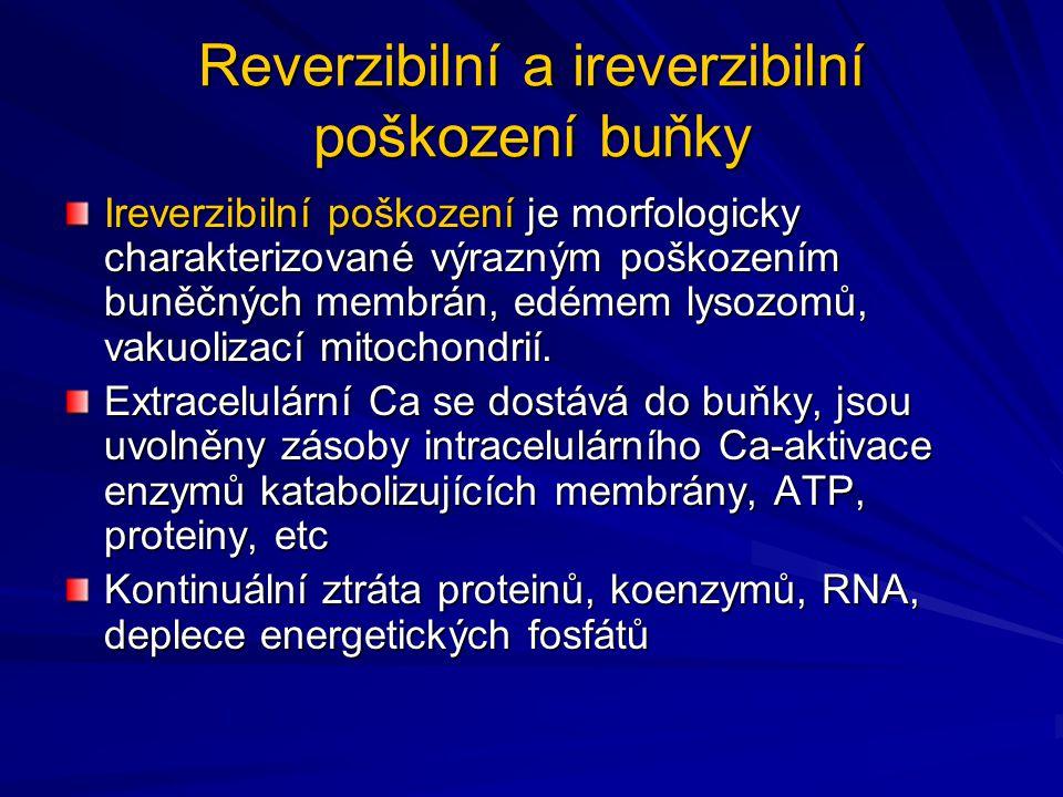 Reverzibilní a ireverzibilní poškození buňky Ireverzibilní poškození je morfologicky charakterizované výrazným poškozením buněčných membrán, edémem ly