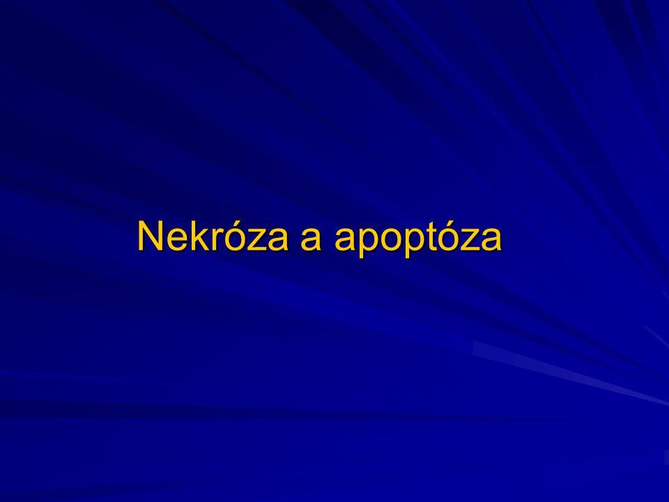 Rozdíl mezi nekrózou a apoptózou