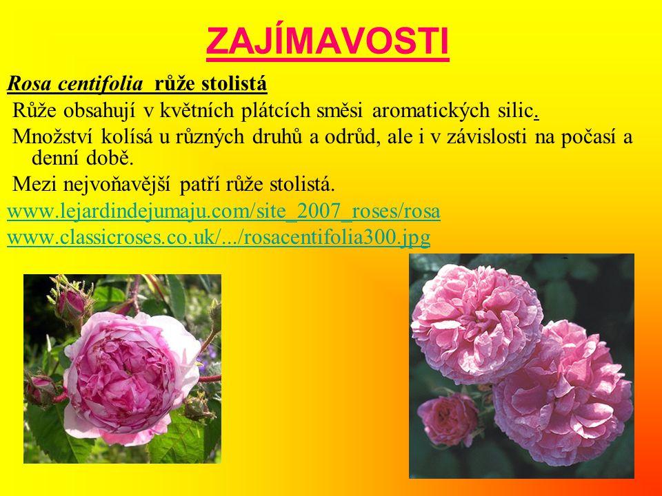 ZAJÍMAVOSTI Rosa centifolia růže stolistá Růže obsahují v květních plátcích směsi aromatických silic. Množství kolísá u různých druhů a odrůd, ale i v