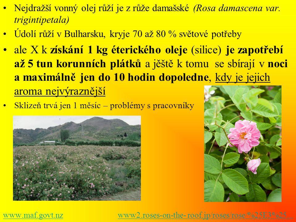 •Nejdražší vonný olej růží je z růže damašské (Rosa damascena var. trigintipetala) •Údolí růží v Bulharsku, kryje 70 až 80 % světové potřeby •ale X k
